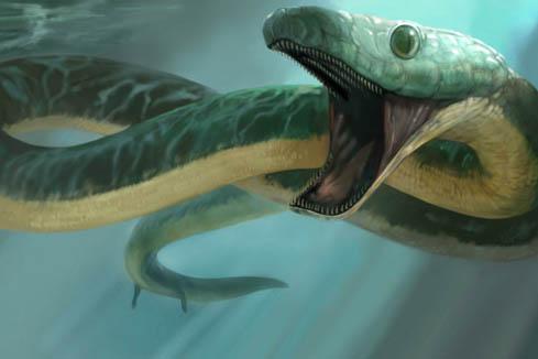 [Image: Ein_Yabrud_snake_with_legs_Pachyrhachis_...aticus.jpg]
